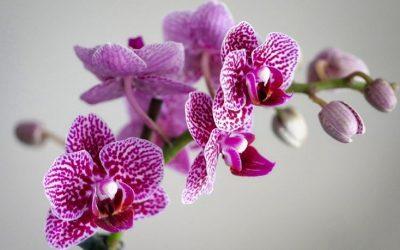 Le orchidee di Beatriz